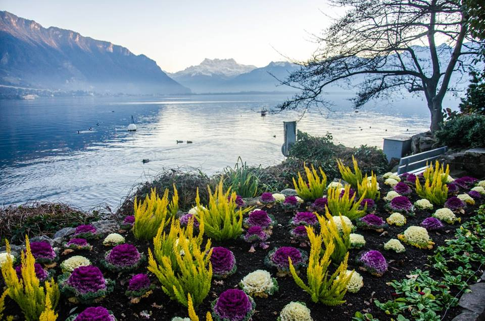 Montreux is a Swiss resort town on the eastern end of Lake Geneva at the foot of the Alps.
